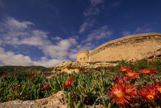 Carpobrotus edulis, Castillo de San Ramón