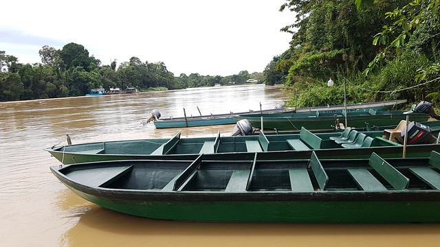 Kinabatangan River first half