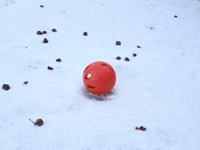 rojo de invierno