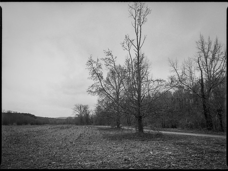 winter landscape, barren field, dirt roadway, near dusk, Biltmore Estate, Asheville, NC, Mamiya 645 Pro, Kodak Tri-X 400, Moersch Eco film developer, 1.10.19