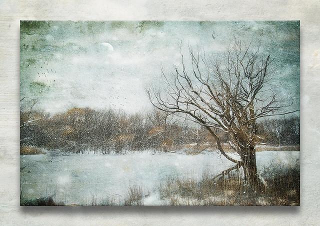 Winter Quiet - The Sentinel