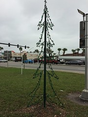 Christmas Tree By The Intersection