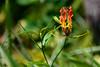 India - Kerala - Marari Beach - Flower - 2242 by Peter Goll thx for +14.000.000 views