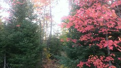 Kab-Ash Trail, Voyageurs National Park  9/26/2013