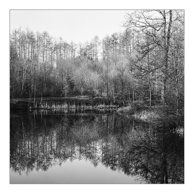 Silence, forest pond near Kell am See