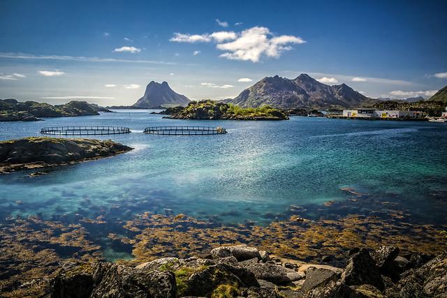Salmon land (Lofoten)