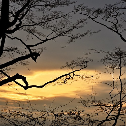 goldenhour evening sunset trees branches abstract pattern nature