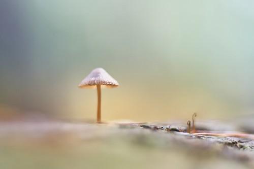 Little World (explored)