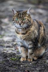 Katze - kitten  (由  DeanB Photography