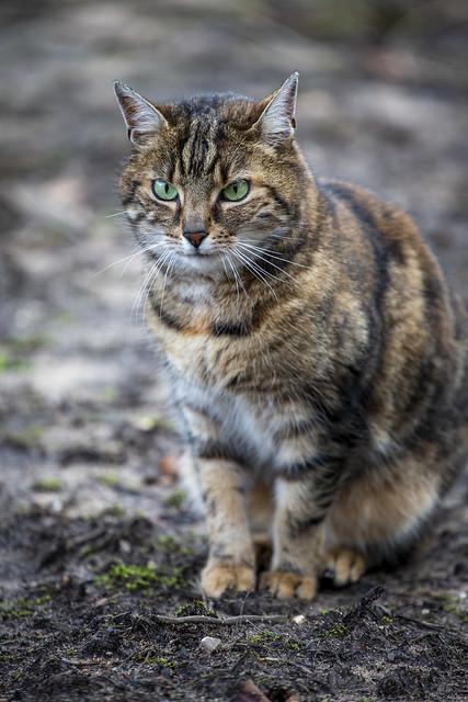 Katze - kitten