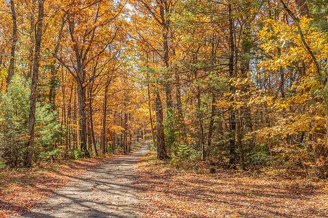 Road Through Fall 10/28/2019 04