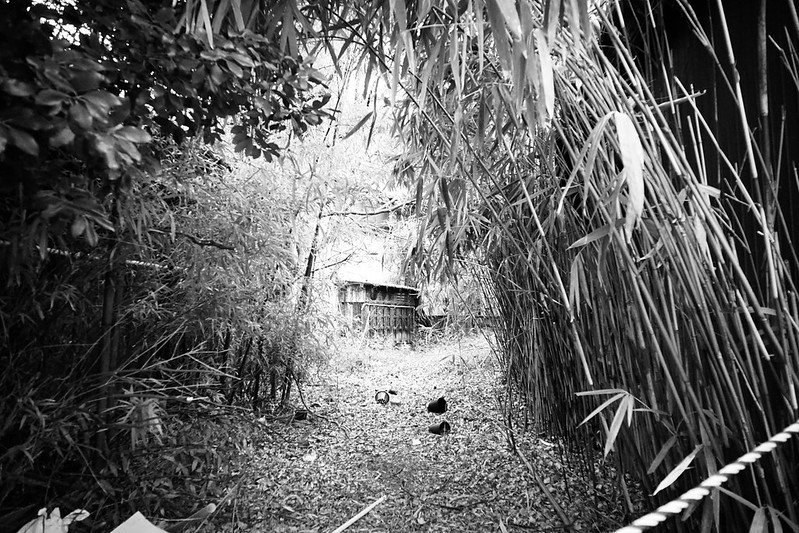 144 20200112チョートクブラぱち塾京島曳舟に行く途中の竹林モノクロ