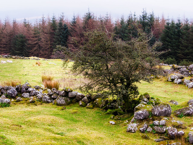 Stone Wall and Trees 2