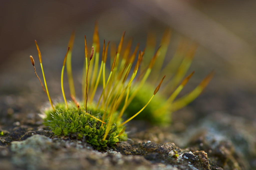 Small Patch of Moss