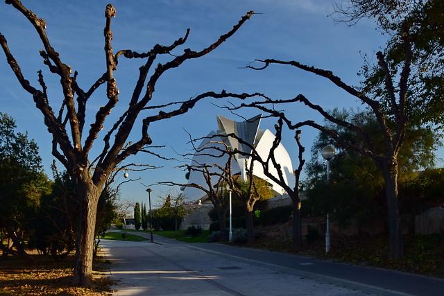 Wintry trees at Turia Park