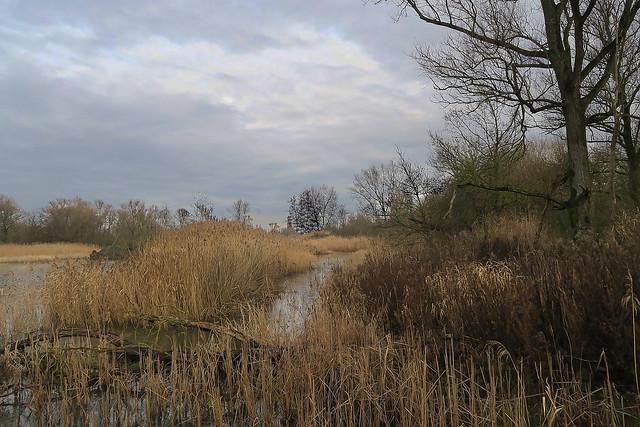 Hoboken Creek - Belgium