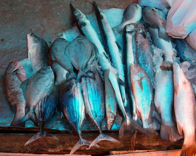 kerala fish, blue hue