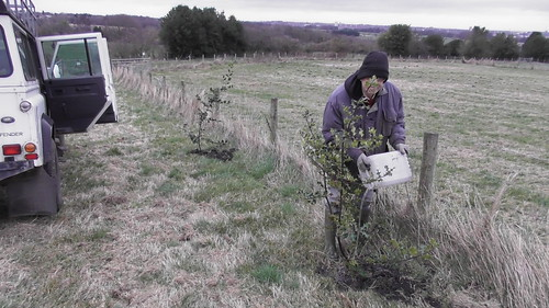 hedge planting Jan 20 (3)