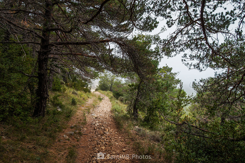 Bajando del Bosc de l'Agustenc a La Mussara