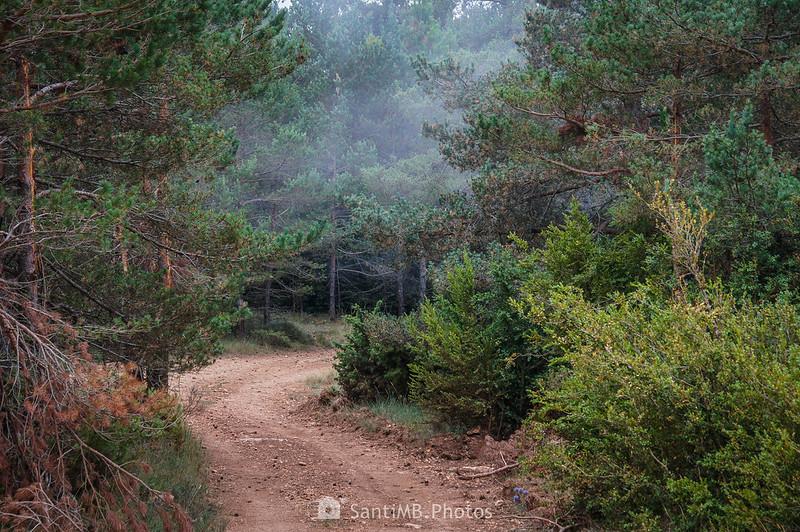 Niebla cerca del Coll de l'Agustenc