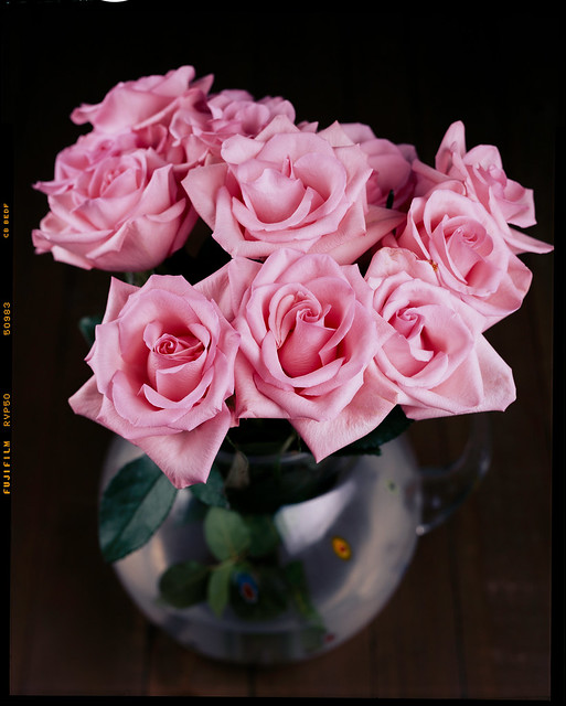 Pink Roses [4x5 Velvia 50]