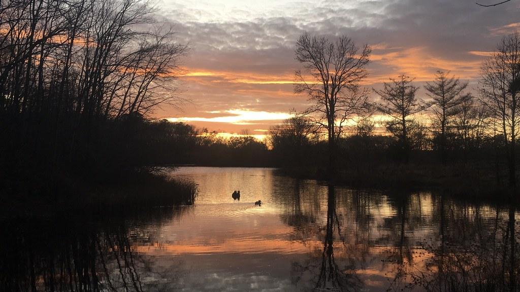 The Lake At Turkey Swamp Park