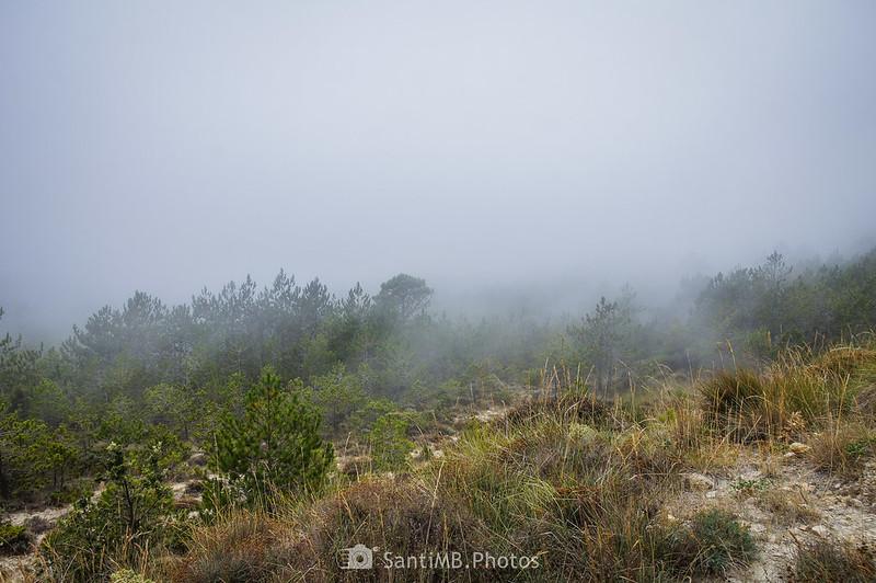 Niebla sobre los Plans de la Mussara