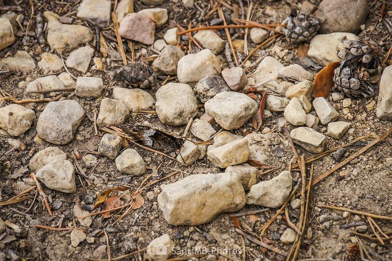 Mariposa camuflada en el Camí de la Font de la Mussara