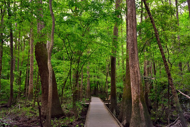 Something Great Awaits With a Step Forward Taken... (Congaree National Park)