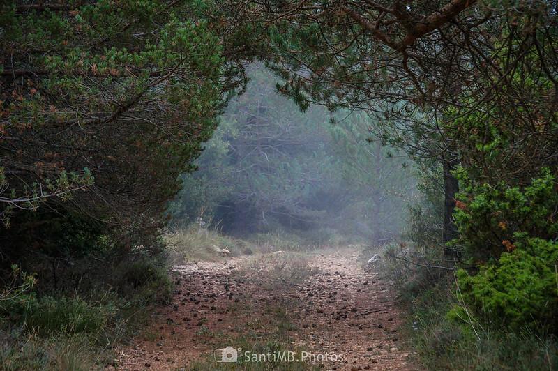 Niebla en el camino por el Bosc de l'Agustenc
