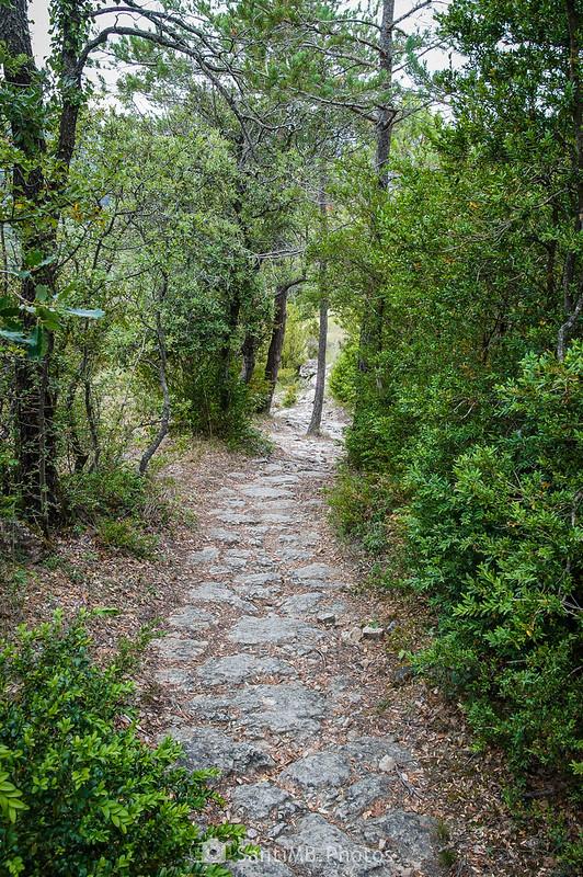 Camí de la Font de la Mussara