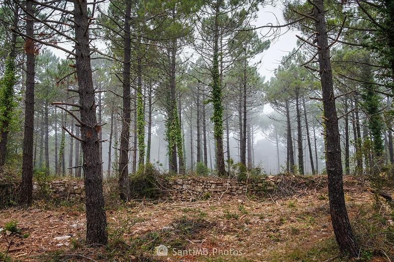 Niebla en los alrededores de la Mussara