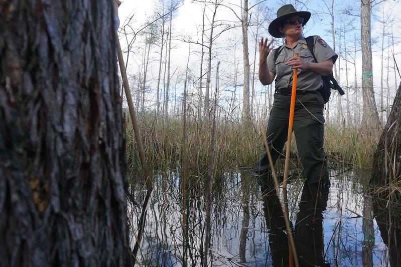 Wet Walk with a National Park Service Ranger, Big Cypress National Preserve, Fla., Jan. 2020