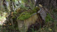 Nature's petrie dish