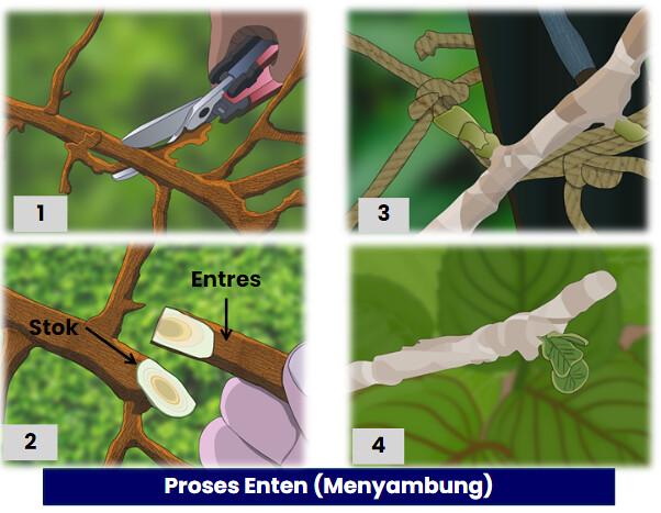 reproduksi tumbuhan3