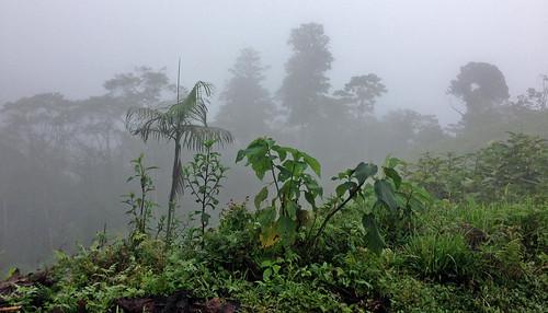 Ecuador, lindo y querido!
