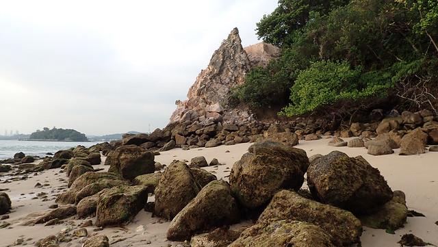 Living coastal forest of St John's Island