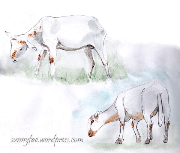 2 sheeps grazing