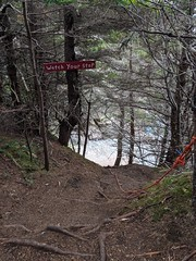 Watch your step, indeed - Chance Cove trail