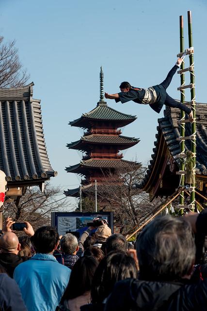 Traditional Acrobat