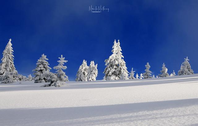 Winter Rhapsody