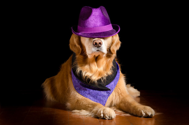 Handsome in Purple