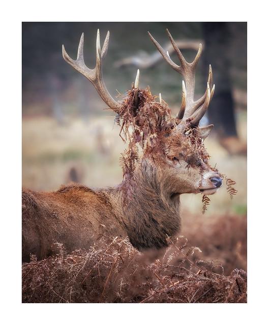 New Hair, Deer?