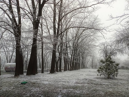 Foggy winter in the park