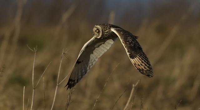 Owl - Mesmersing Eye