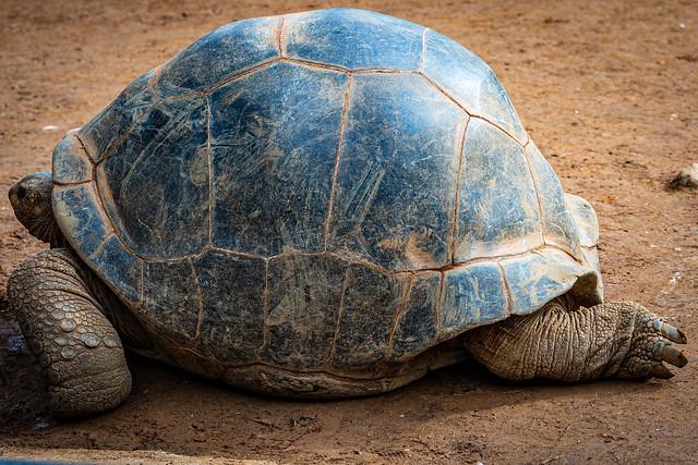 伊東にゆくならハ ト ヤ! ハトヤの亀に連れられて Sigma 24-70mm F2.8 DG DN Art で撮ってみれば 絵にもかけない美しさ