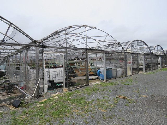 The nurseries at the Virgin Islands Department of Agriculture and the University of the Virgin Islands Agriculture Experiment Station