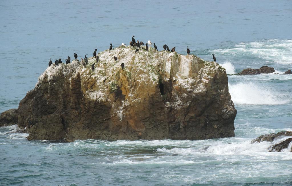 Best Coastal Hikes In California: Mac Kerricher State Park, California, USA