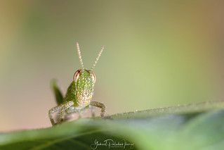 Looking cute | by Gabriel Paladino Photography