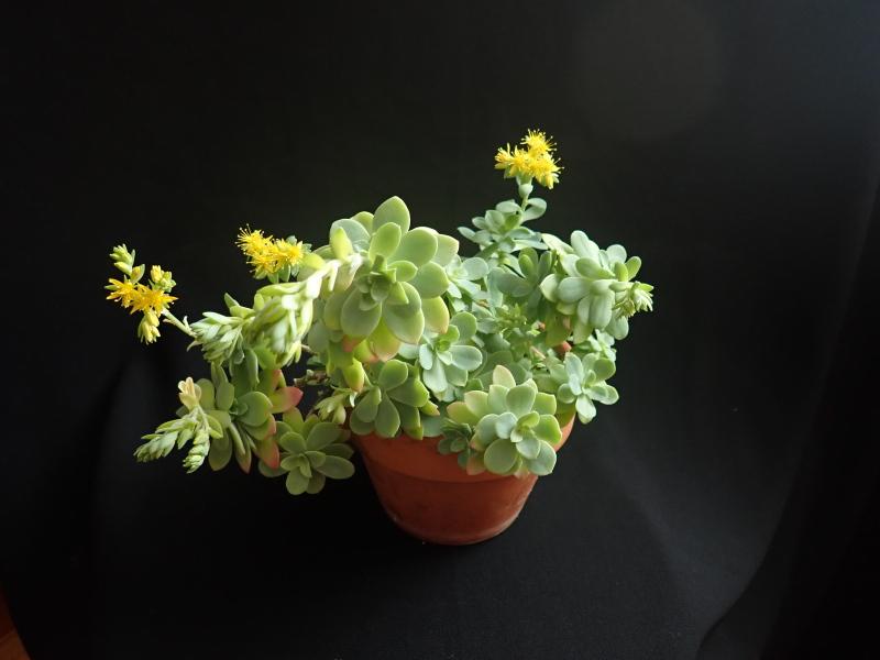 Les succulentes chez Cloo en 2020 49379671178_4657c53b64_o
